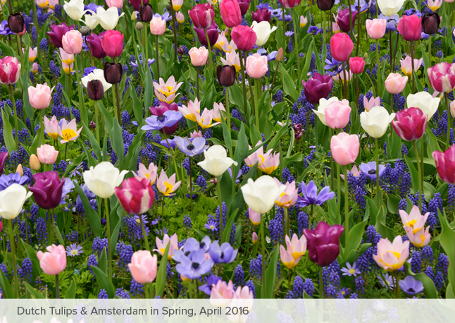 Tulips_home_2016